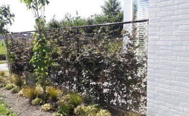 Aanleg complete tuin, Asten, 8